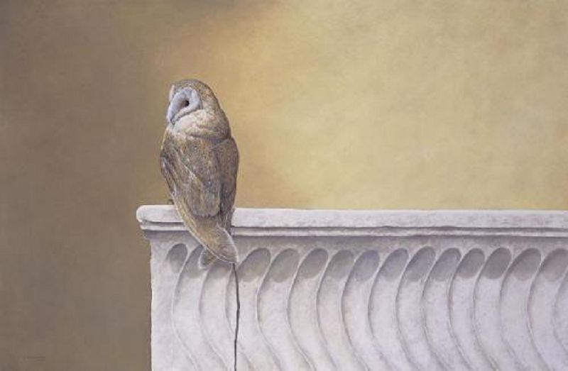 Barn Owl on Marble.jpg