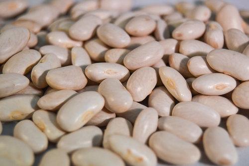 White+beans.jpg