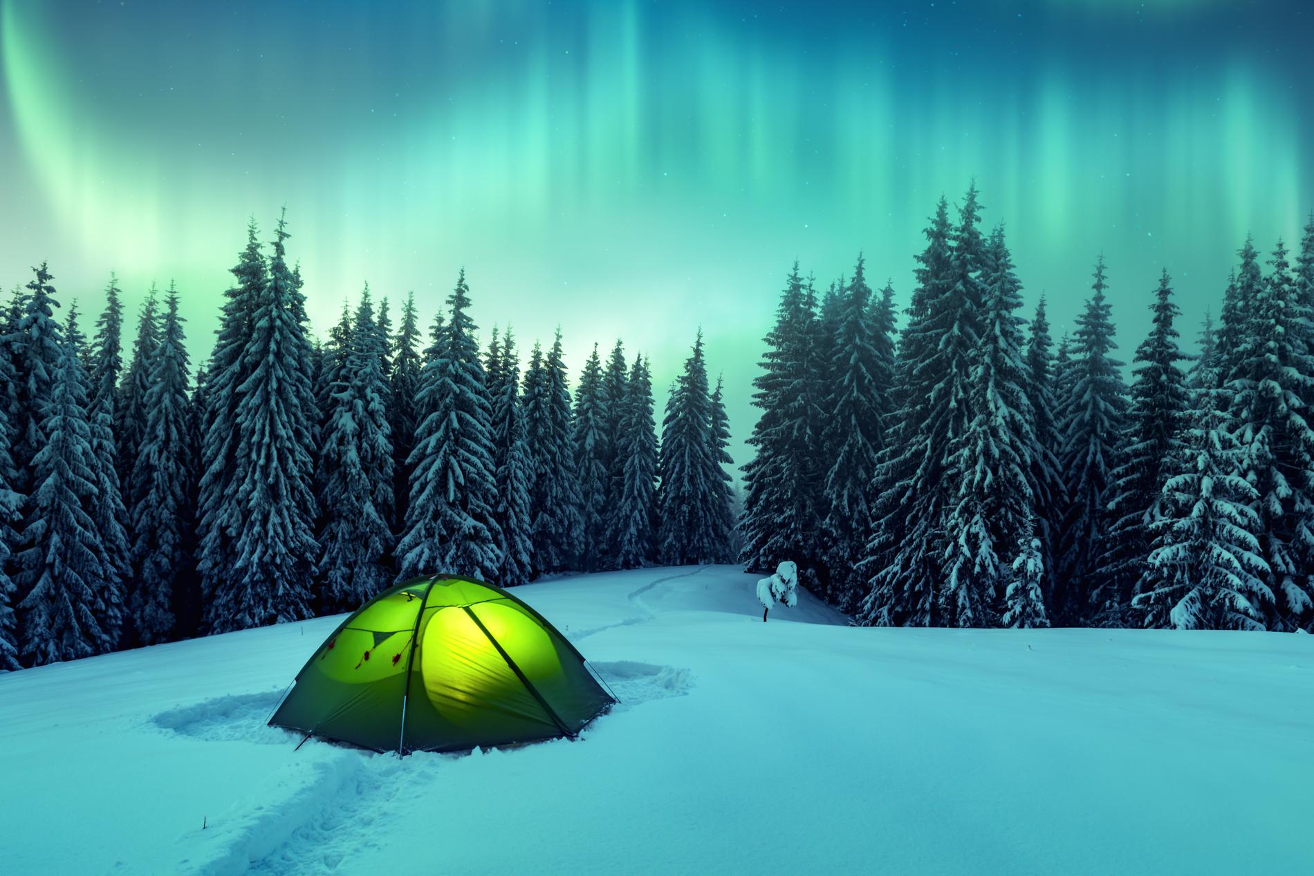 northern-lights-in-winter-forest-EGAU725.jpg