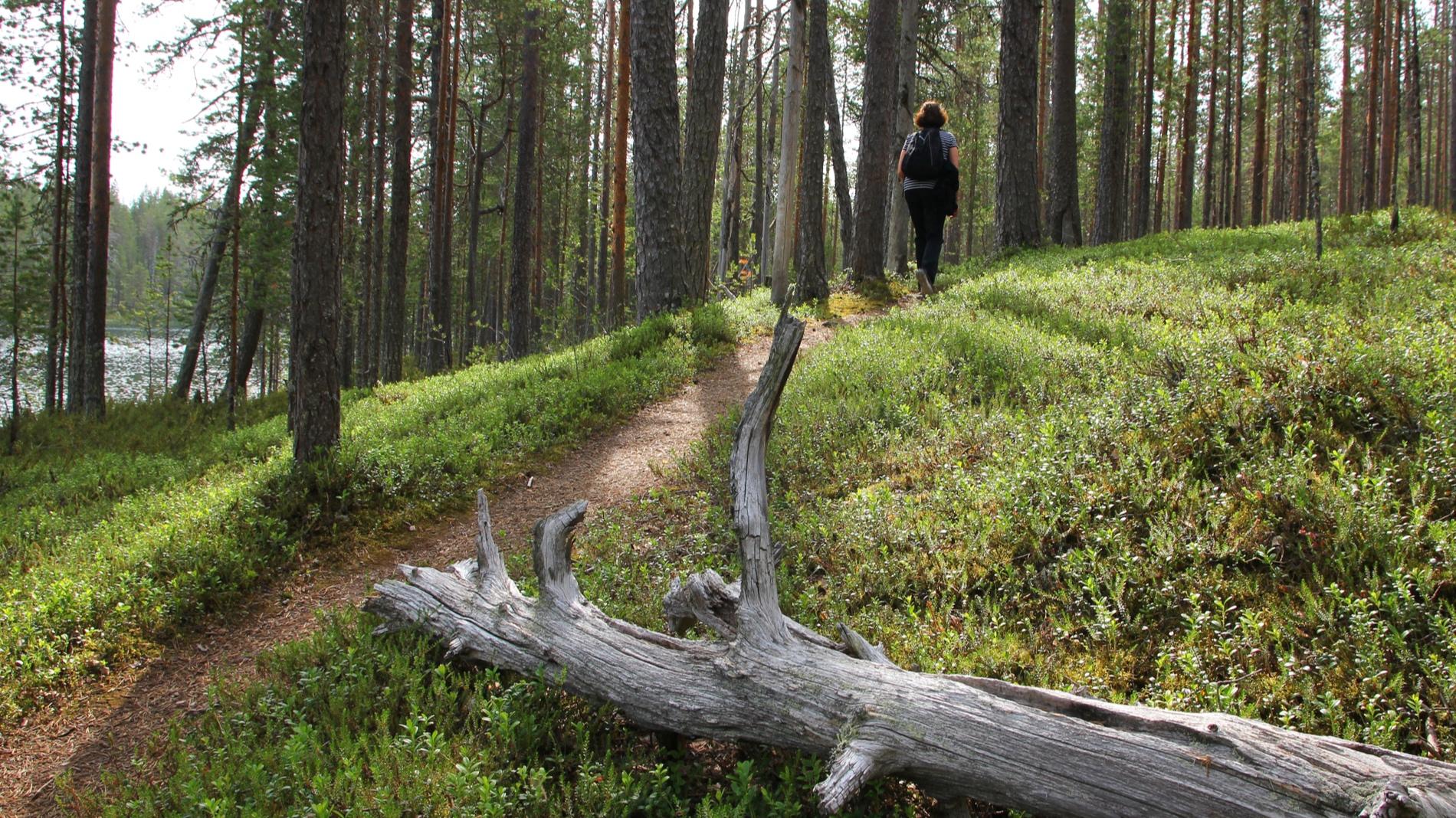 female-hiker-on-forest-trail-P55HR39.jpg