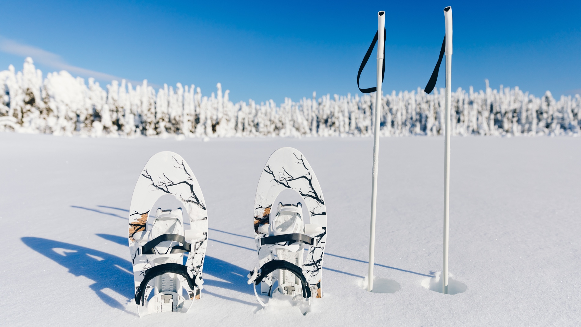 We have two different snowshoeing tours. Please learn more and find the one which will suit you the best.  LEARN MORE