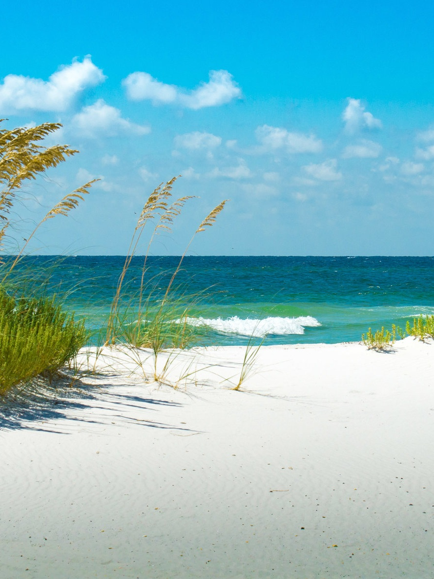 Land - Land based initiatives by Escape cover conservation efforts in the Florida Panhandle, specifically in our Florida State Parks.