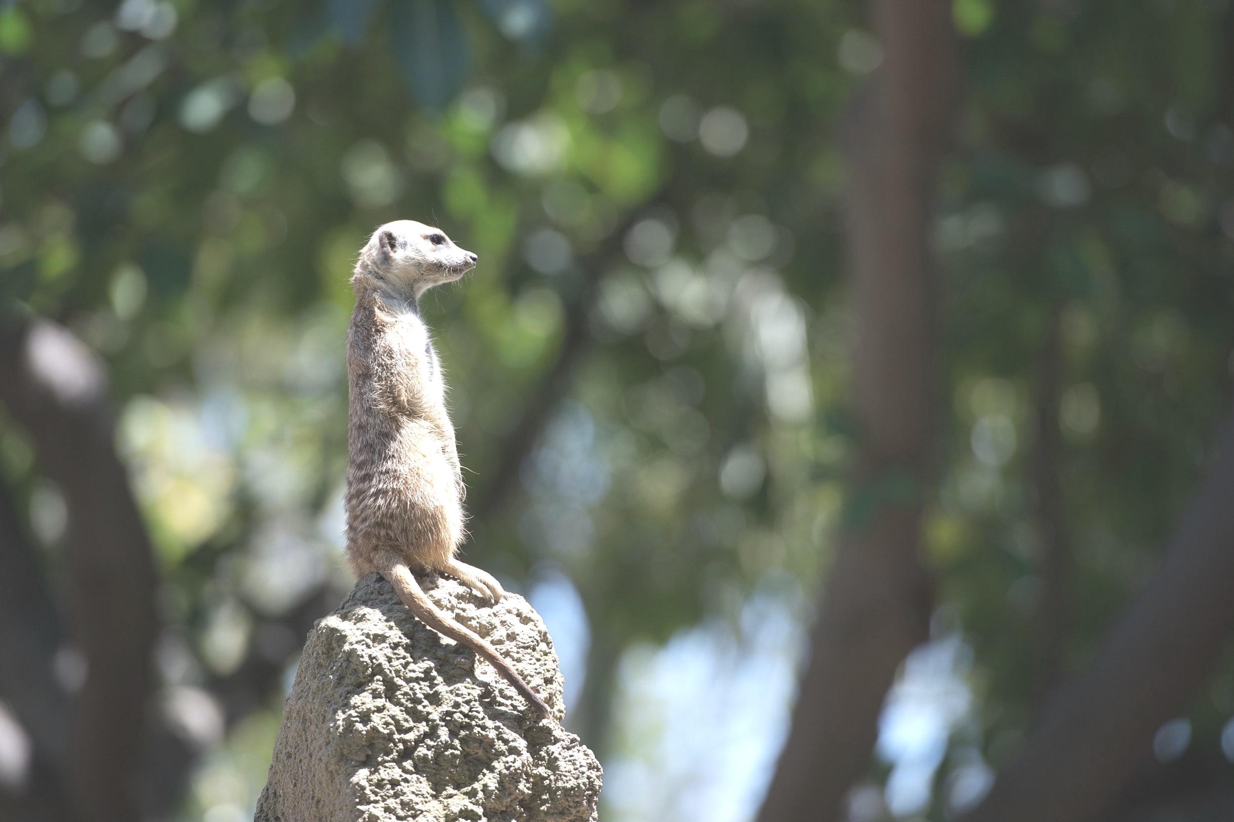 3) Upright,confident posture. -