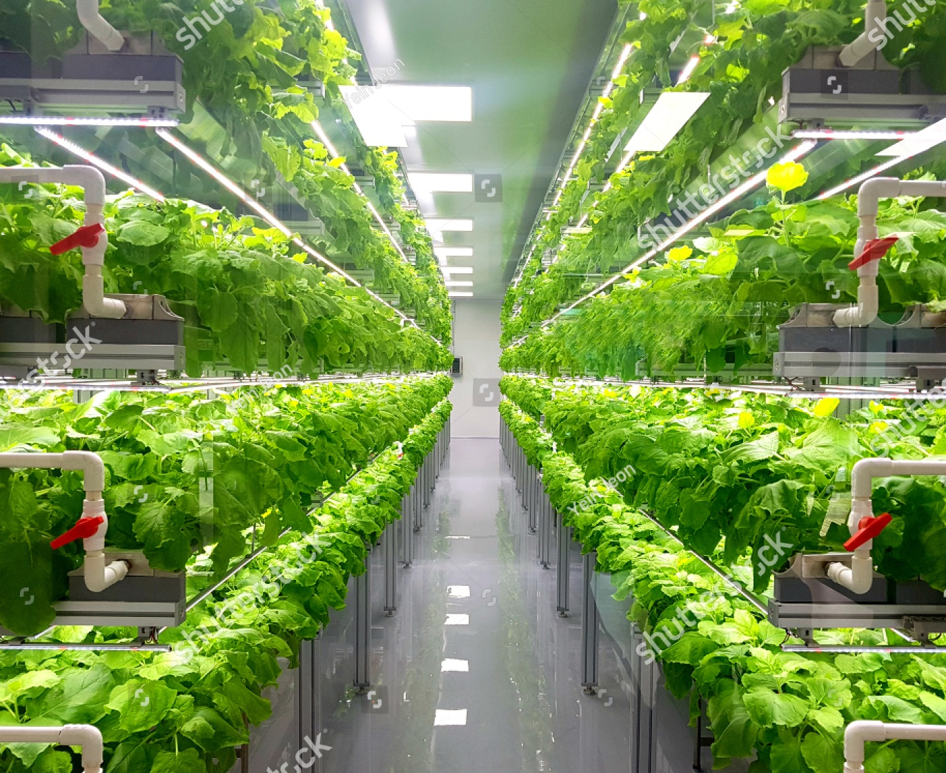 Vertical Farming -