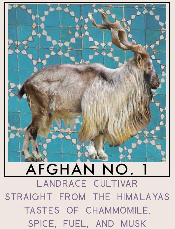 afghanno1-01.png
