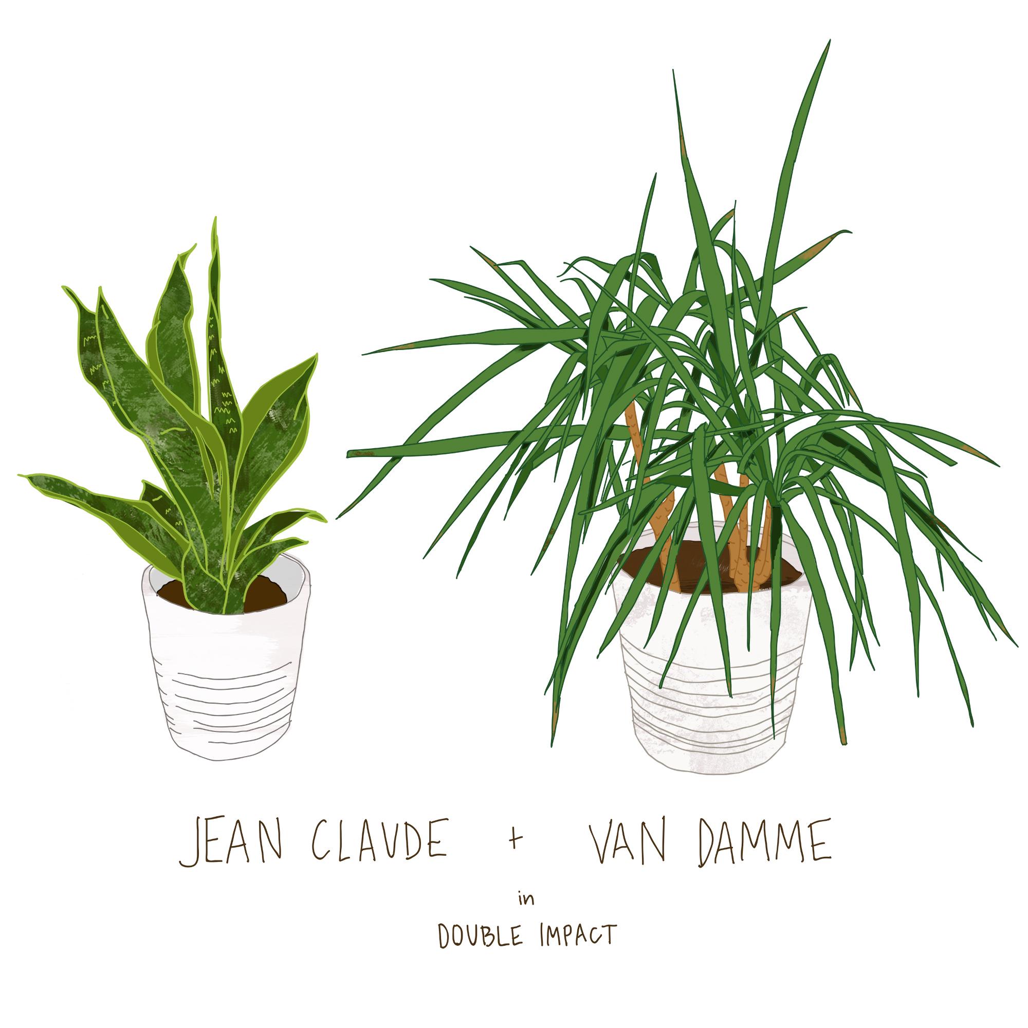 Jean Claude Van Damn1.jpg