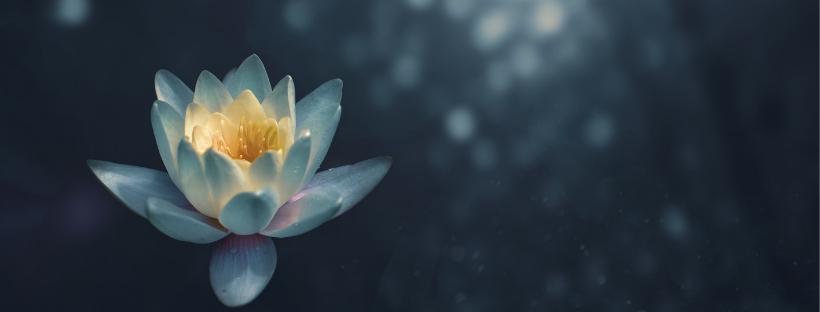 Yoga Ayurveda Leigh Shand