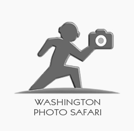 Washington Photo Safari