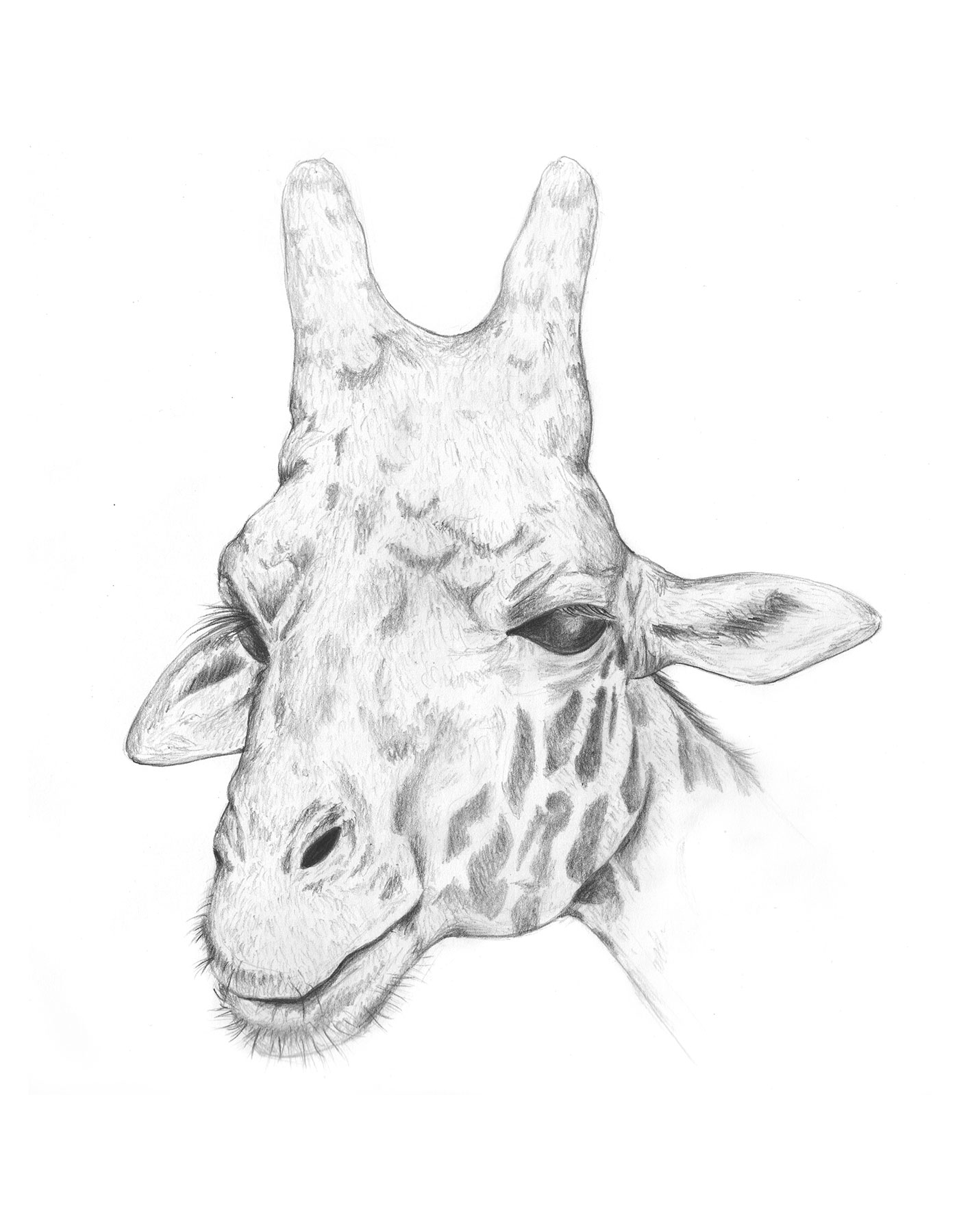 giraffe-pencil_LR.jpg