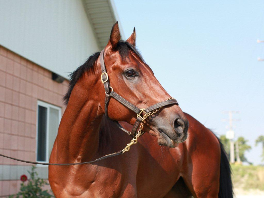 Millionaire and Champion, Fatal Bullet, 2009