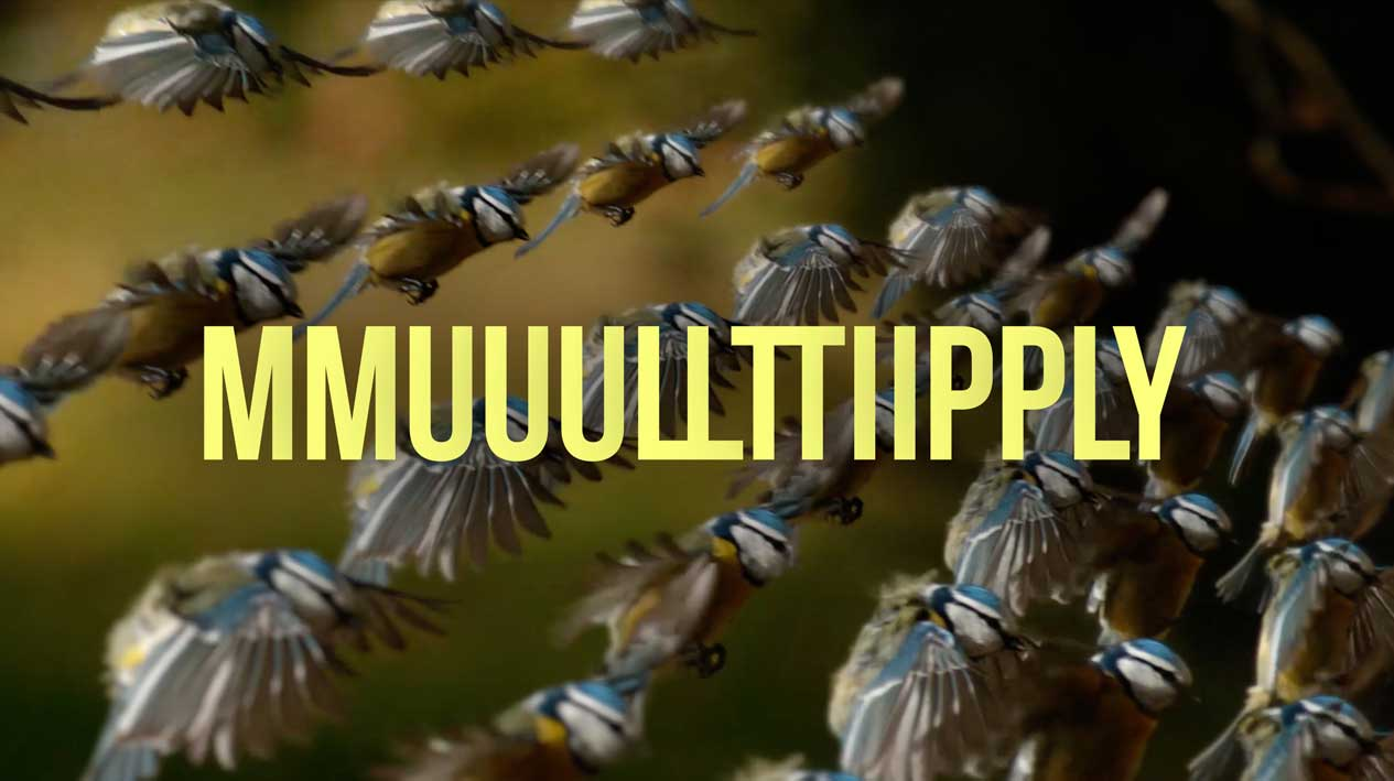 multiply-reel.jpg