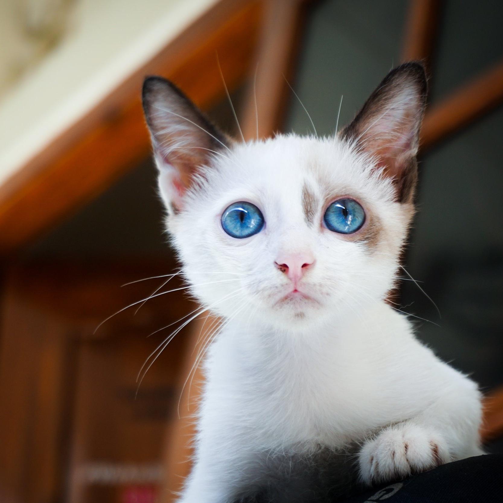 adorable-animal-animal-photography-171227.jpg