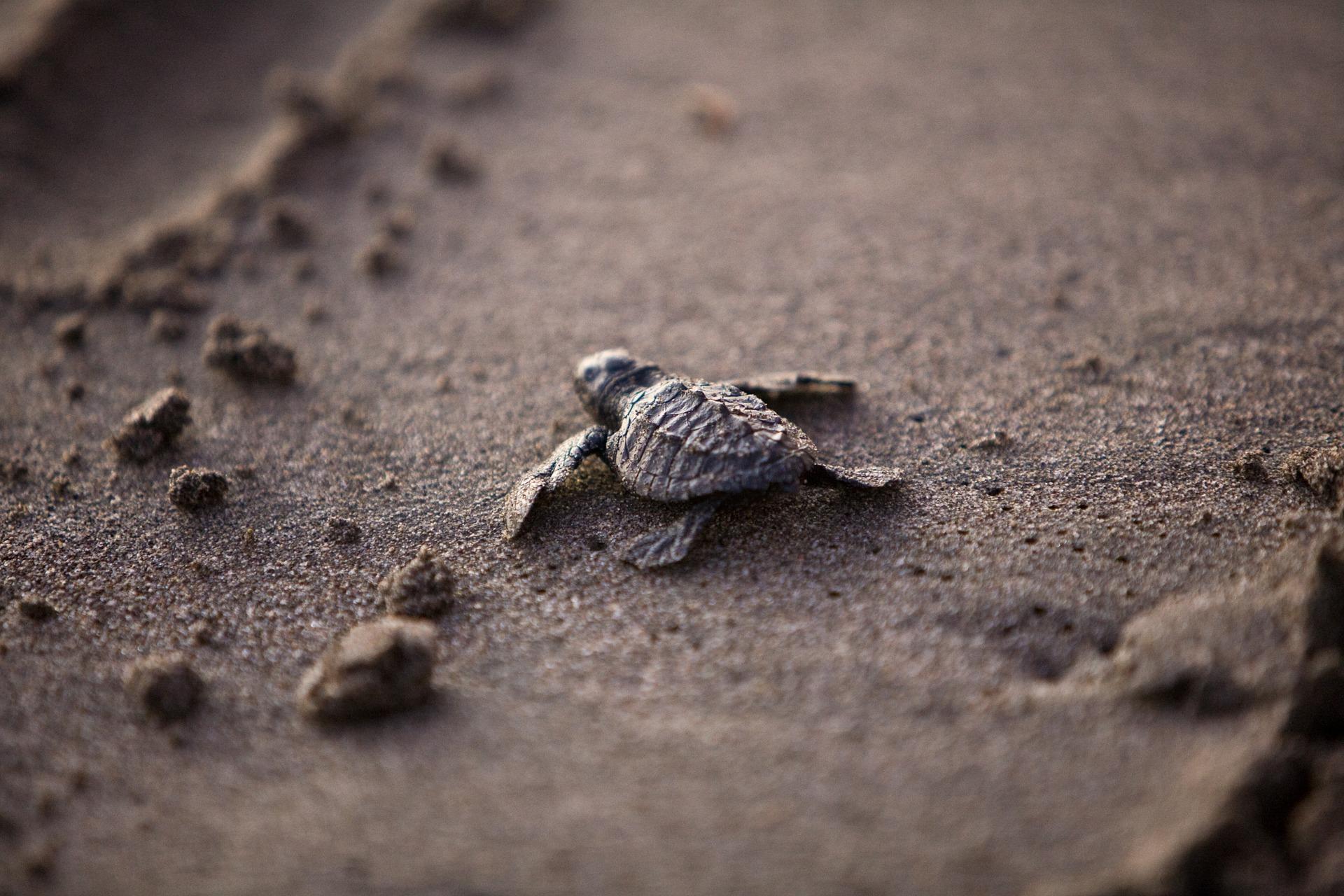 sea-turtle-356125_1920.jpg