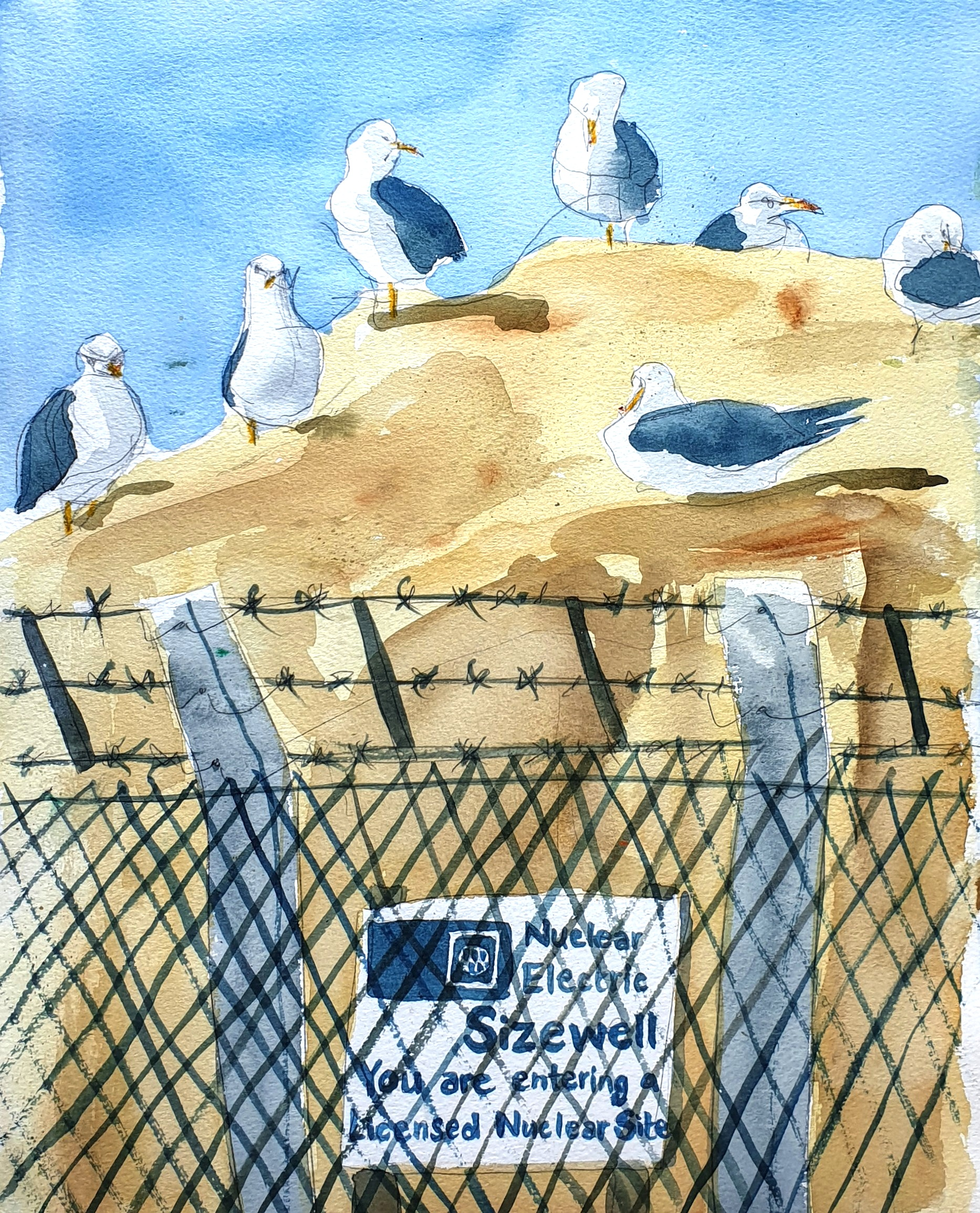 Field sketch: Lesser black-backed gulls, Sizewell Nuclear Power Station, Suffolk . Illustration © 1991 by Tim Warnes