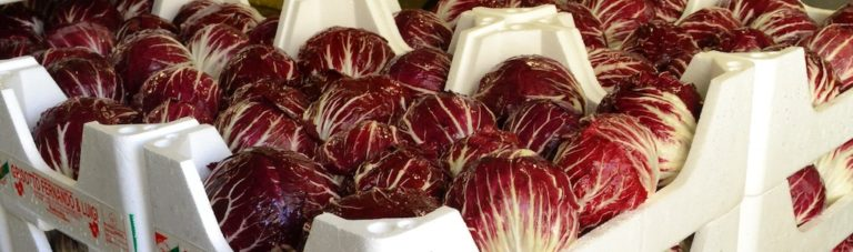Chioggia radicchio cases ready to be shipped