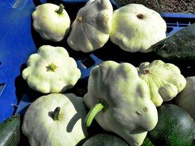 cucurbita-pepo-scallop-summer-squash-clagett-farm-share-sept-21-and-25-2010.jpg