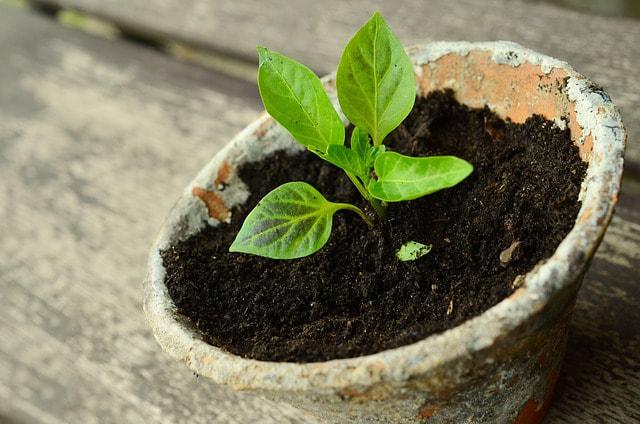 plant-786689-640_1_orig.jpg