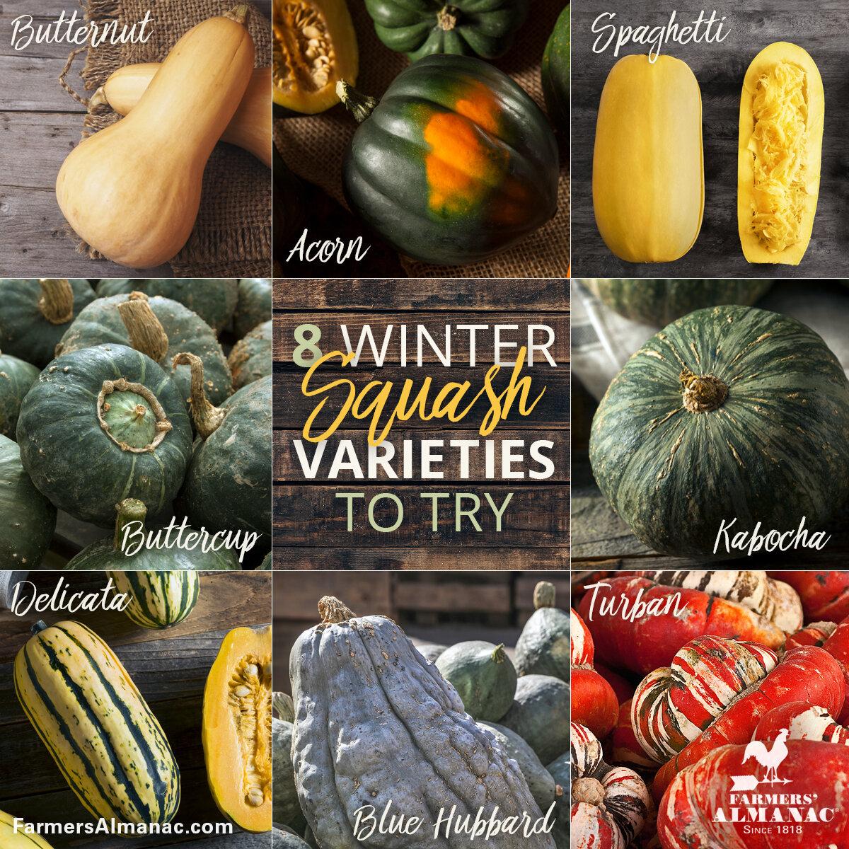 Winter squash comes in so many amazing colors! (Image: Farmers Almanac)