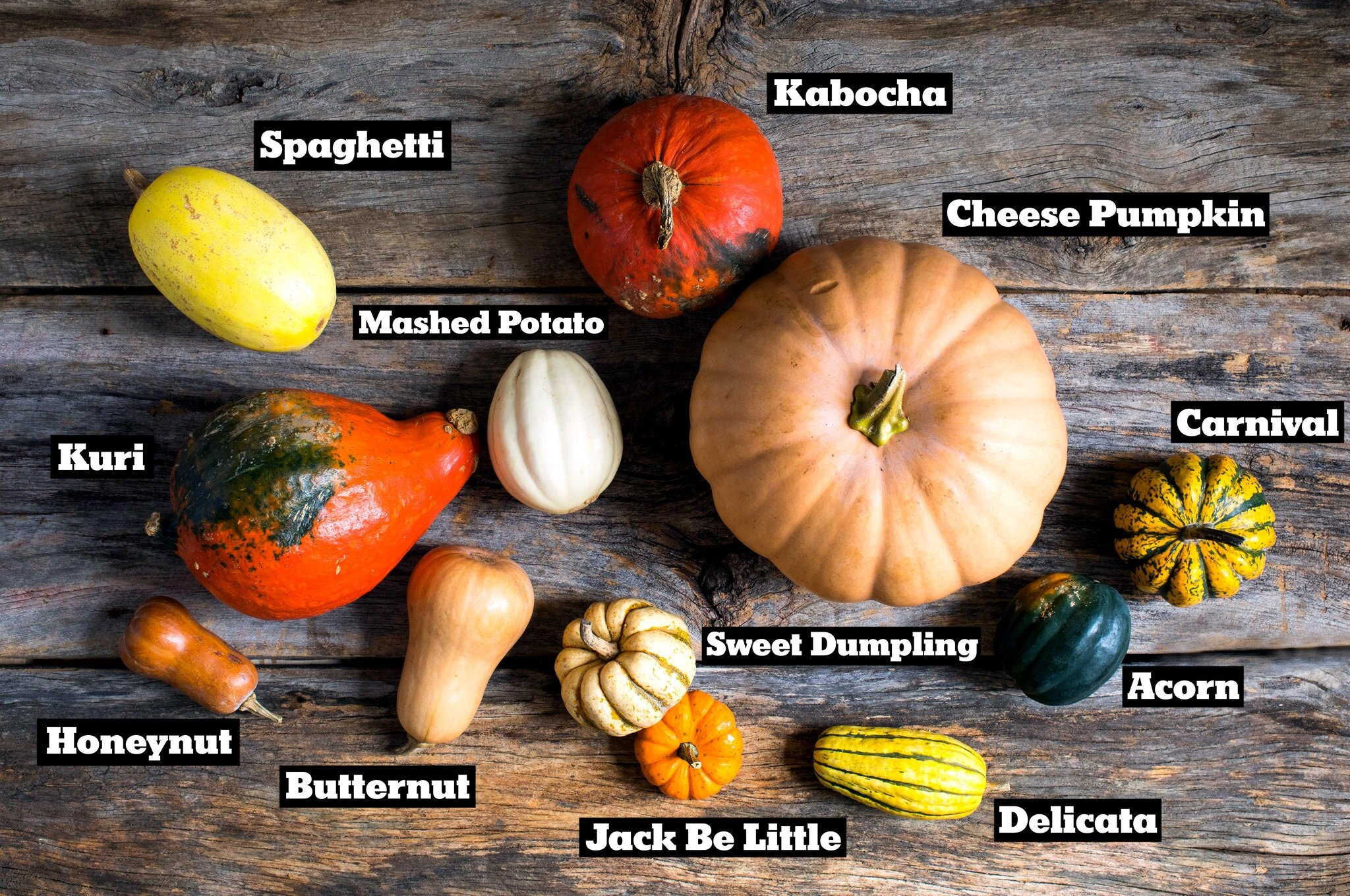 What's your favorite winter squash? (Image: New York Times)