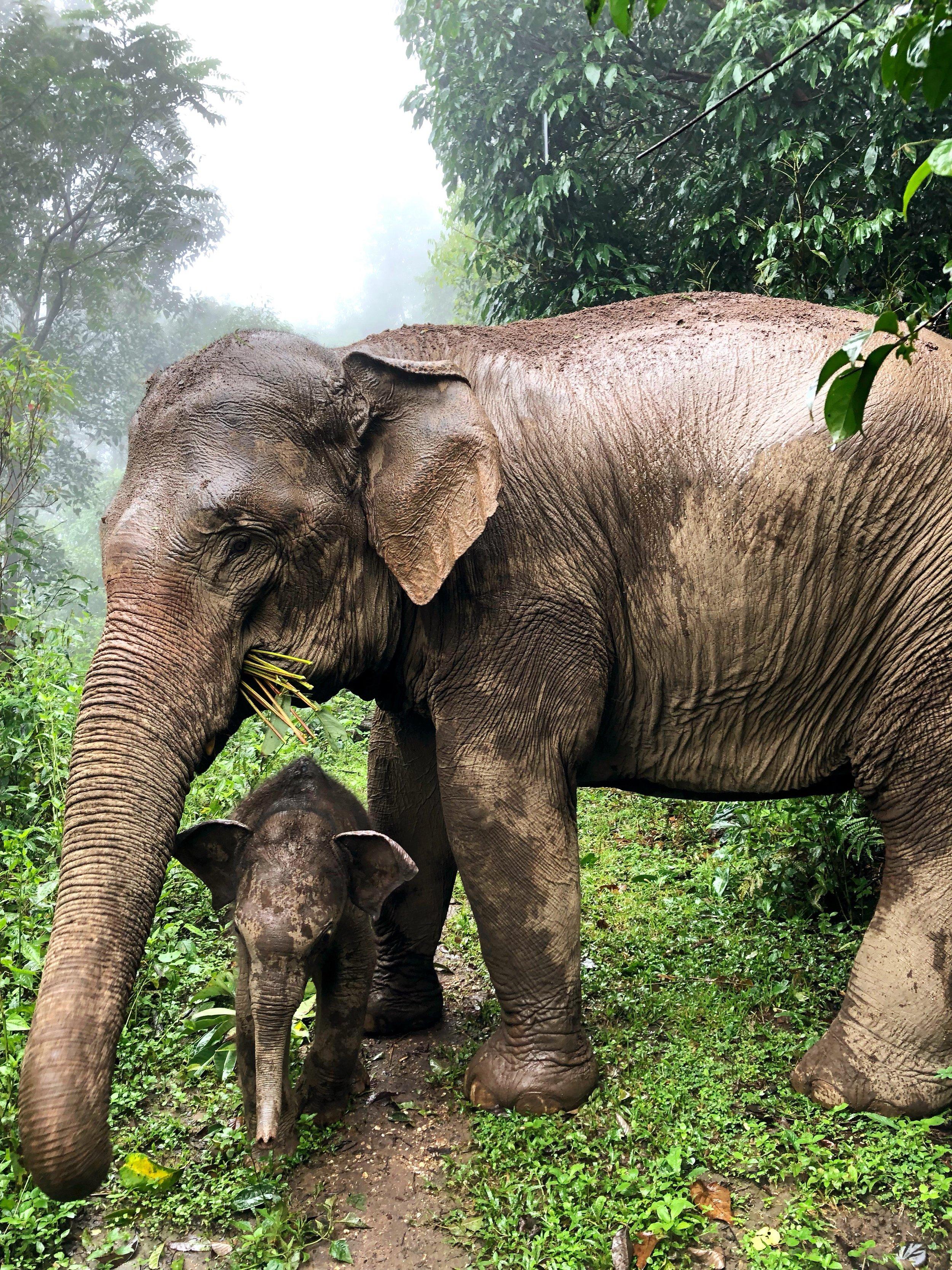 Mo Pau Na and Freedom in the jungle.