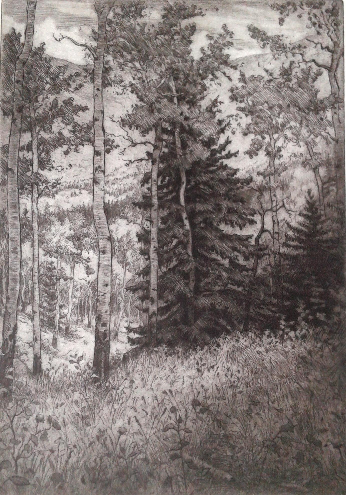 "Aspen and Pine 6.5x9"""