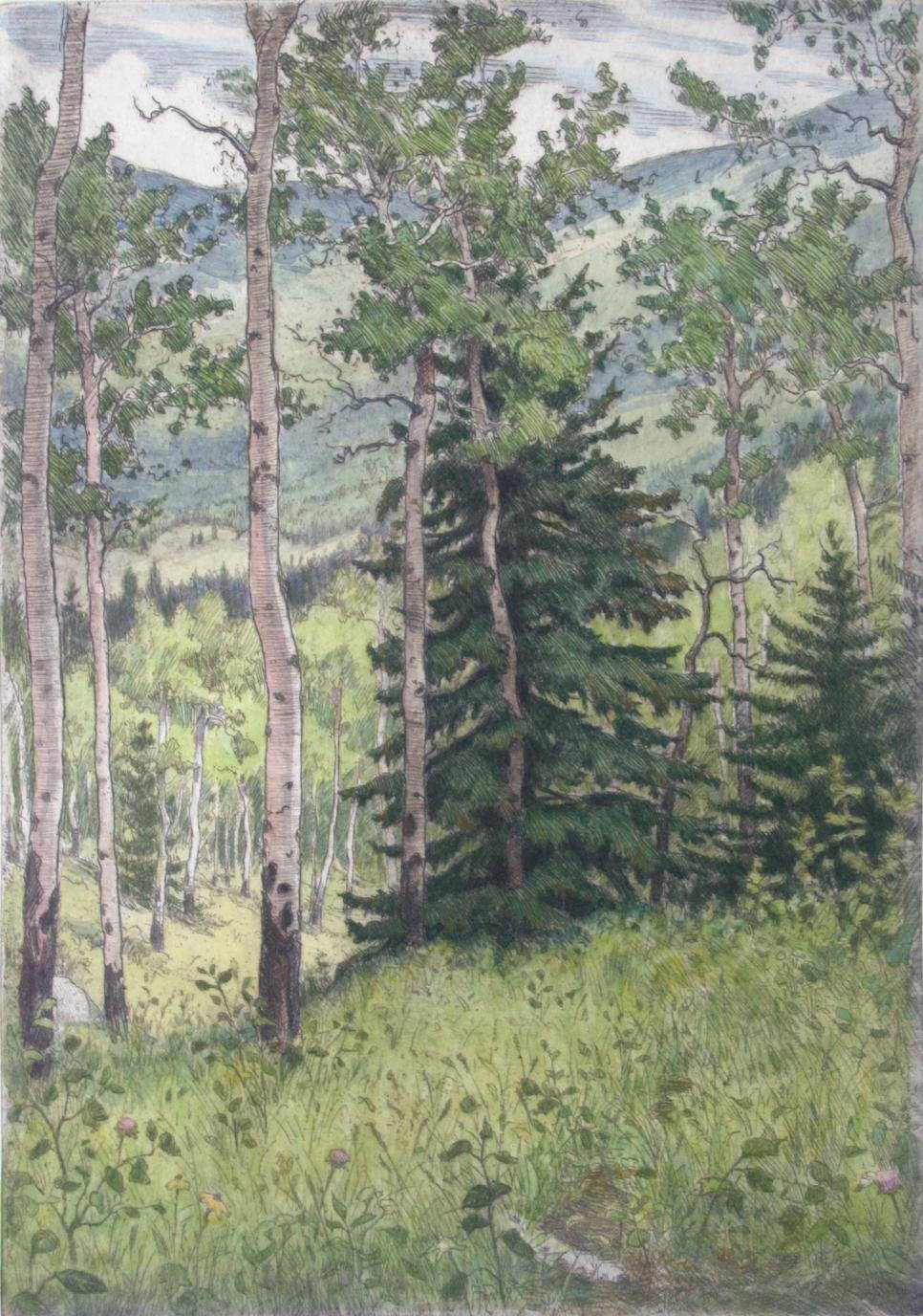 Aspen & Pine