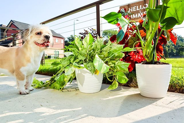 Happy Labor Day🌿🌱🍃 Oakley is loving the morning sunshine and so are my plants in their cute @youniversalproducts pots! #happylaborday #ad