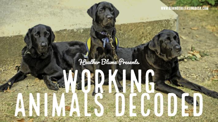 Working Animals Decoded Main Image.jpg