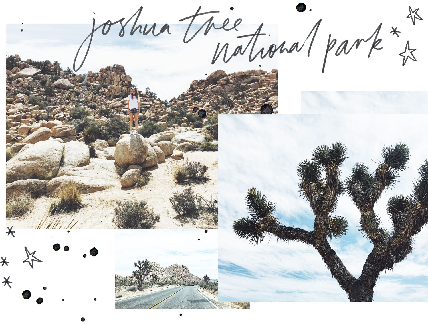Joshua Tree Copyright Harley Quinn & co.jpg