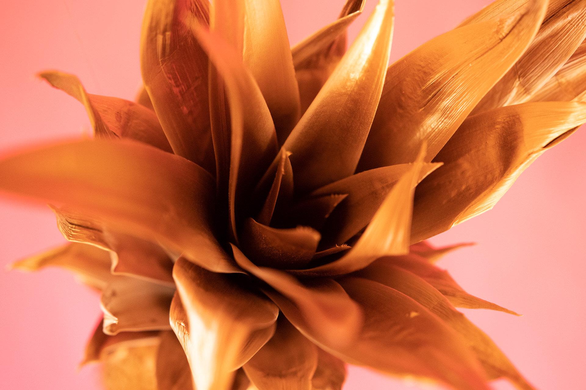 BPP 11 - Golden Pineapple - IG-7.jpg