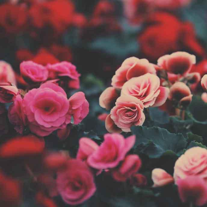 flower_t20_GRE17e.jpg
