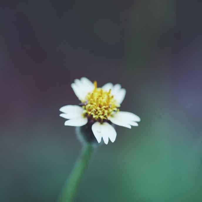 flower_t20_EPgzrJ.jpg