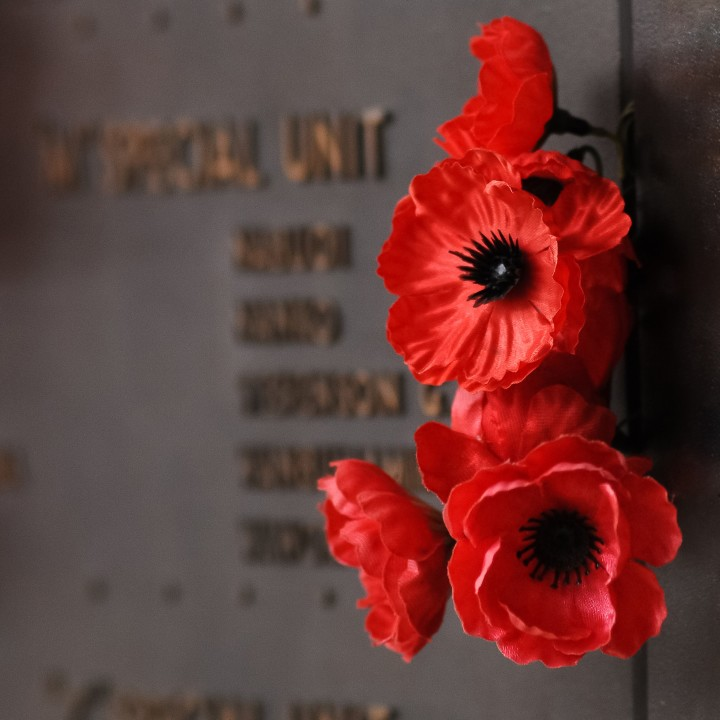 red-poppy-to-salute-the-fallen-veteran-heroes-from-the-wars_t20_8lGoAQ.jpg