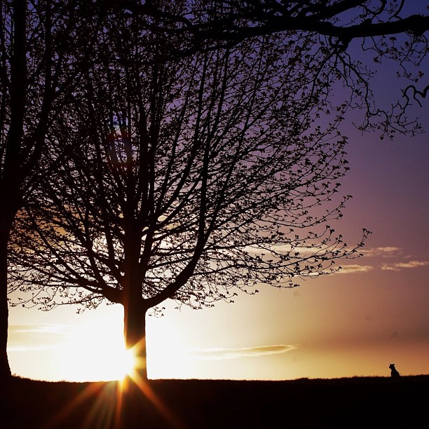i-was-watching-the-sunset-while-the-dog-was-watching-the-tree_t20_7n8A8B.jpg