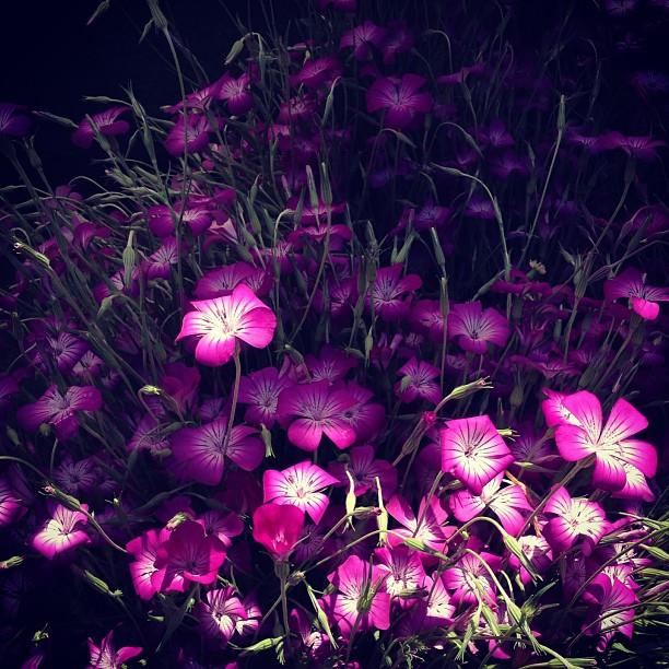 photo-sketch-from-a-walk-beautiful-light-on-flowers_t20_w6rxr8.jpg