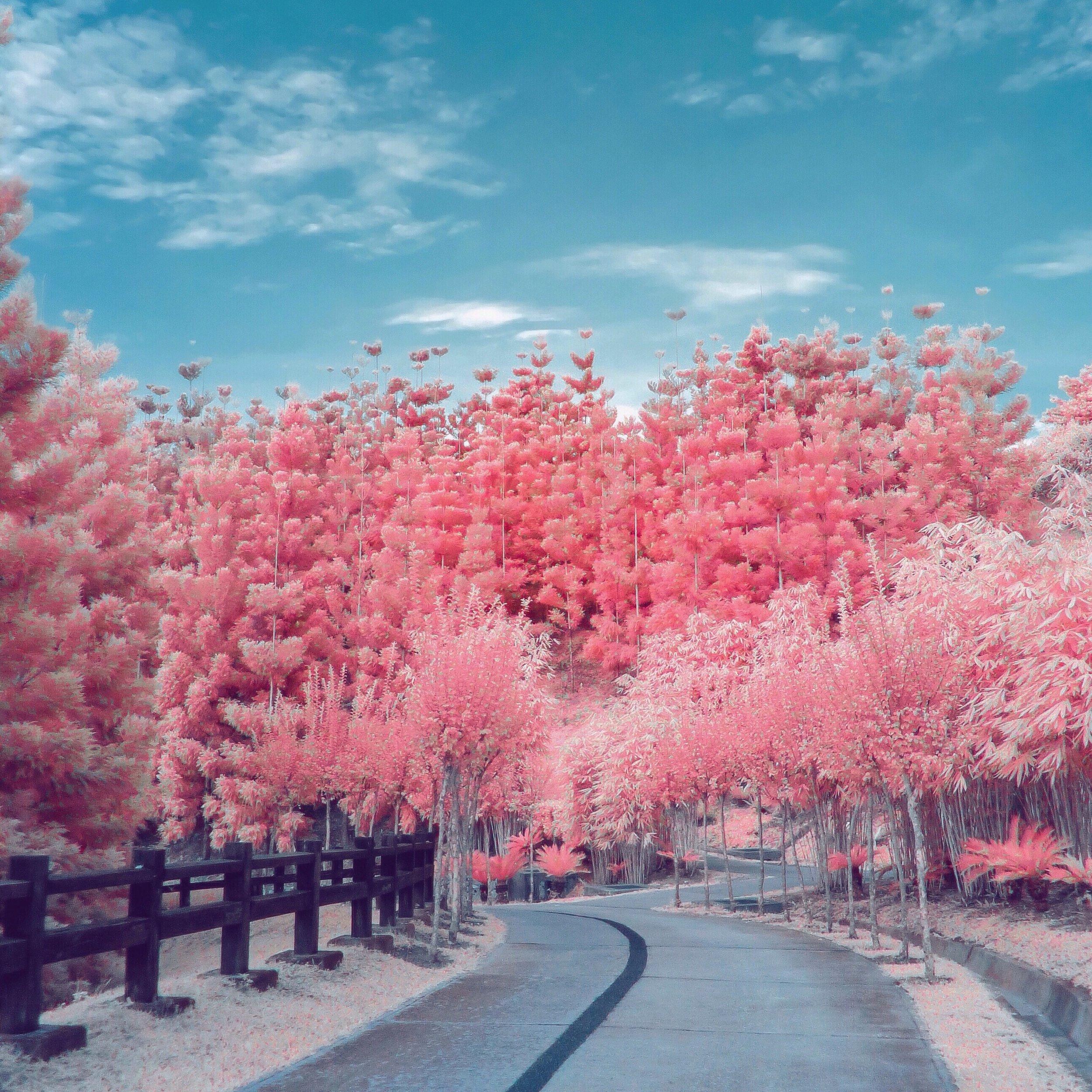saujana-hijau-park-putrajaya-infrared-shot_t20_WAPQ9Y.jpg