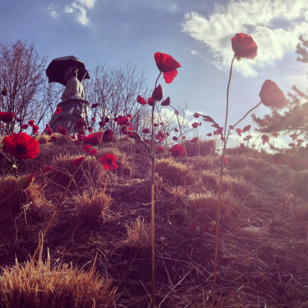monet-poppy-hill-at-grounds-for-sculpture-in-nj_t20_PvO44N.jpg