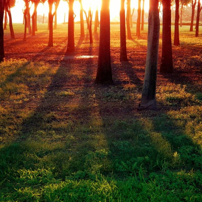 tree-trunks-at-sunrise_t20_Yge4Xm.jpg