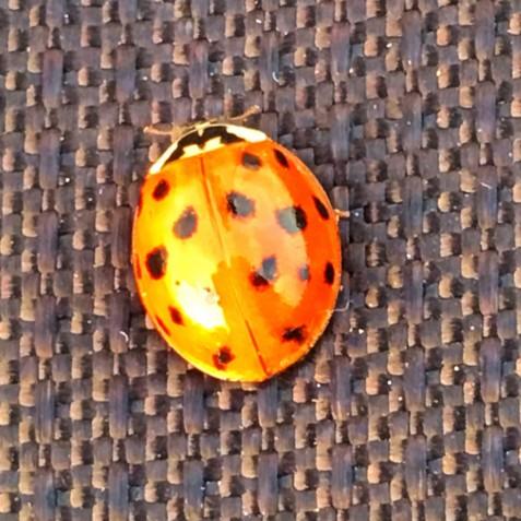 ladybug_t20_R6r7Nw.jpg