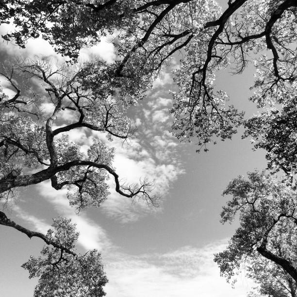 bnw-old-cottonwoods-at-shady-lakes-albuquerque-nm-sept-2014_t20_aQzn3Q.jpg
