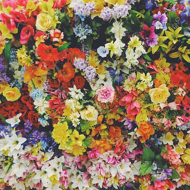 colorful-flowers_t20_eO4X37.jpg