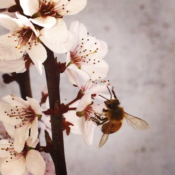 white-blossoms_t20_aee31w.jpg