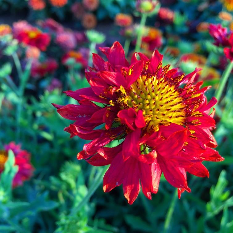 dubai-miracle-garden_t20_yvOZX9.jpg