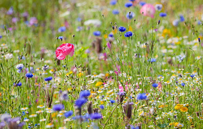 MD Blog Wild Flowers.jpg