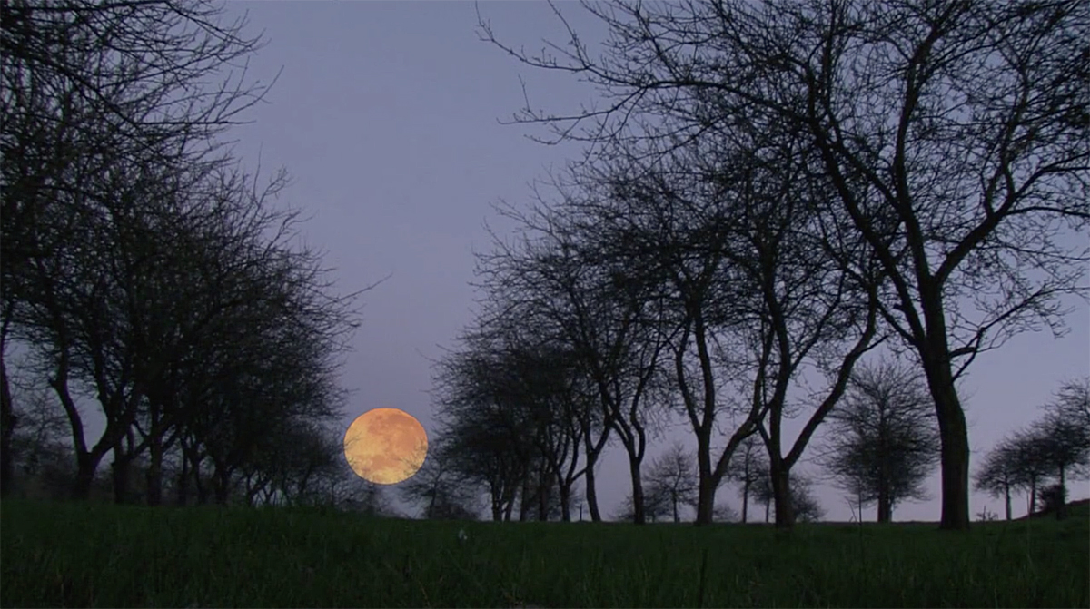 Moonrise over a Somerset orchard - a film about Cider (1/3)