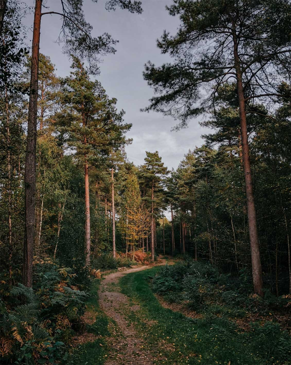 FIRE + WILD, Feast and Forage, Forest, East Sussex