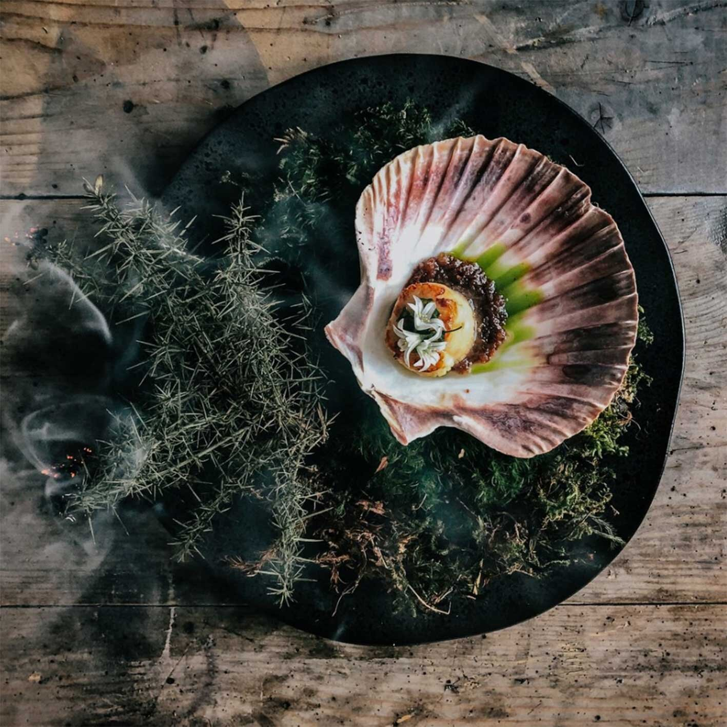 FIRE+WILD Scallops Wild Boar Feast Forage Cook with Fire East Sussex Lewes