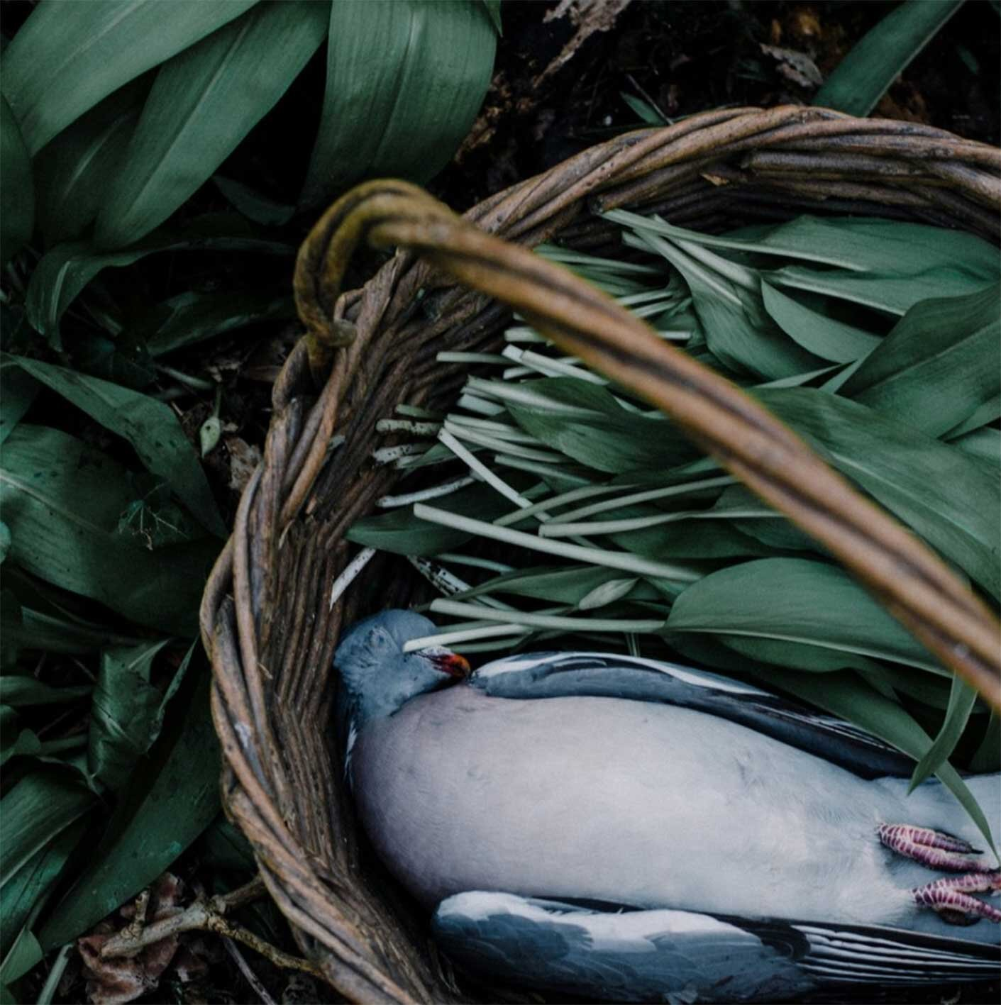 FIRE+WILD foraging hunting cooking with fire East Sussex