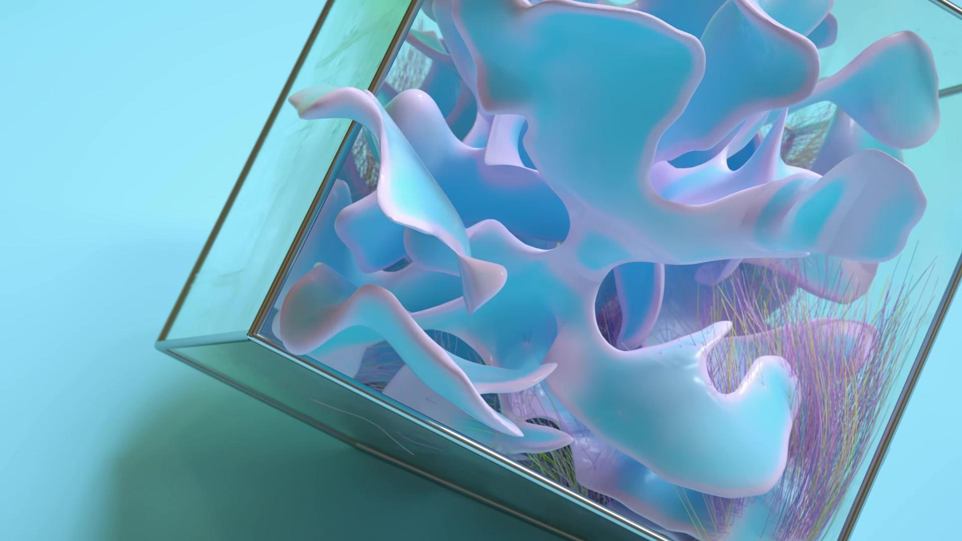 Agaricus-Pilorum-01.jpg