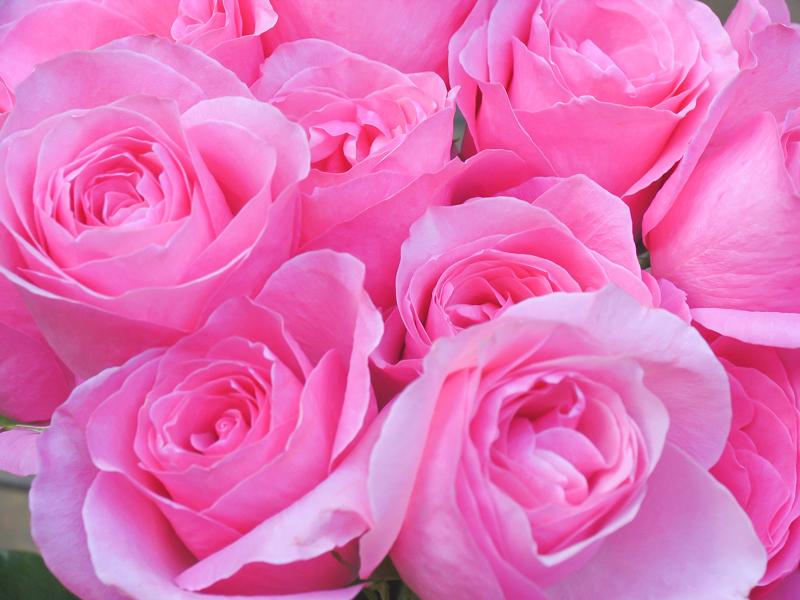 roses 15.jpg